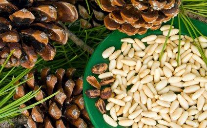 Кедровые орешки: состав, польза, вред, применение