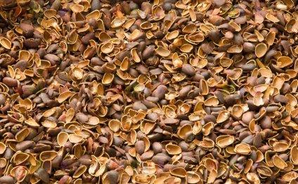 кедрового ореха - Скорлупа, шелуха, тунга - купить у производителя