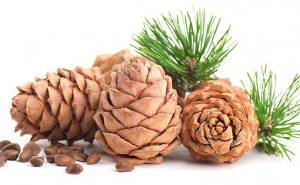 Купить кедровые орехи оптом, цена в Уфе