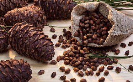 Лечение кедровыми орехами: 5 целебных средств - Позвоночник.инфо