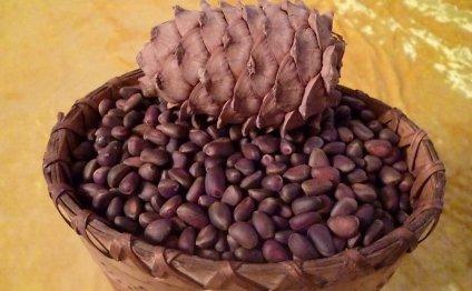 Лечение миомы кедровыми орехами
