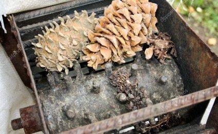 Обработка конуса Орехи кедровые — Стоковое фото © vig1264 #14047279