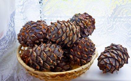 Опыты дилетанта: сборщик кедровых орехов - Телеканал «Наука»