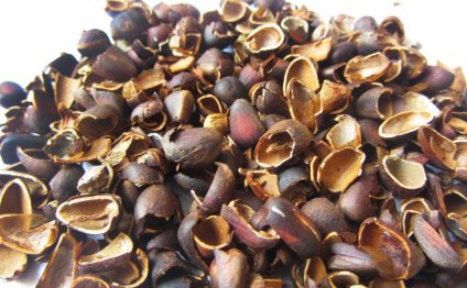 Скорлупа кедровых орехов для удаления волос