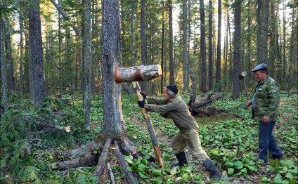 Время сбора кедрового ореха - Александр Леснянский - человек